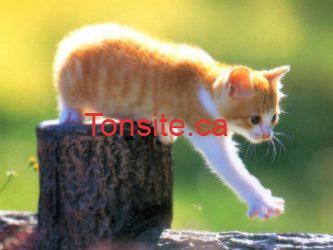 chaton - GRATUIT: Une trousse pleine de cadeaux gratuits pour votre chat! monchaton.ca
