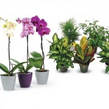 orchidees hd 350x350 - Coupon Home Depot: Achetez 2 orchidées ou plantes tropicales et obtenez la 3e GRATUITE!