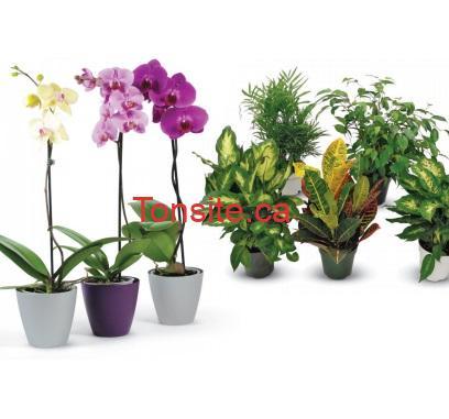 orchidees hd - Coupon Home Depot: Achetez 2 orchidées ou plantes tropicales et obtenez la 3e GRATUITE!