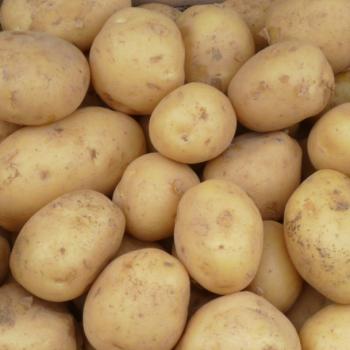pommedeterre 350x350 - Sac de pommes de terre blanches (10 livres) à 1,88$ au lieu de 3,99$