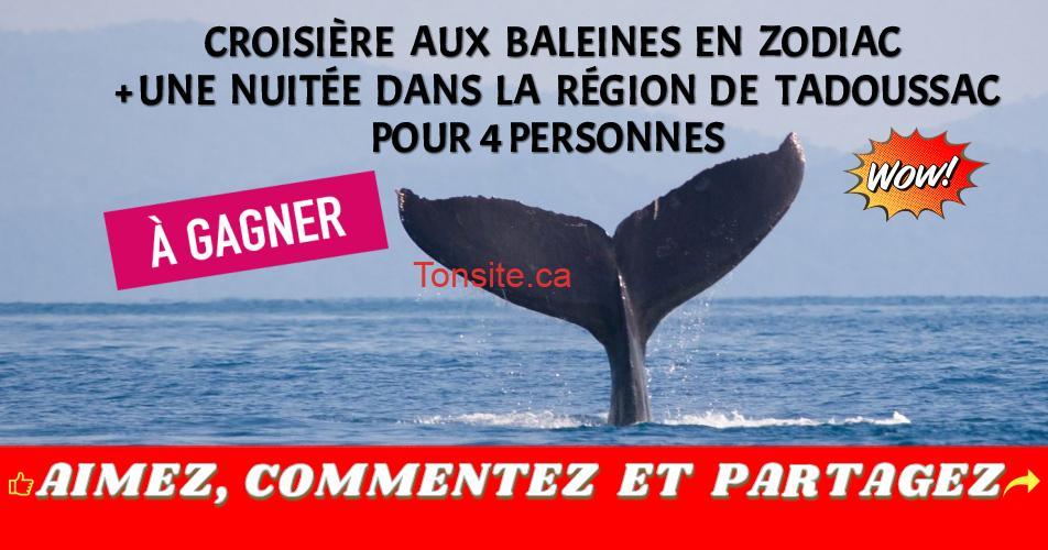 tadoussac concours - Gagnez une croisière aux baleines en Zodiac + une nuitée dans la région de Tadoussac pour 4 personnes