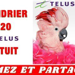 telus2020 gratuit 240x240 - Calendrier Telus 2020 GRATUIT!